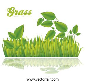 illustration of green grass with leaves isolated on white backgr