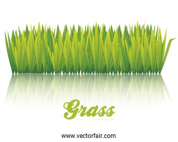 illustration of green grass isolated on white background vector