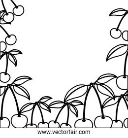 monochrome background with cherries fruits