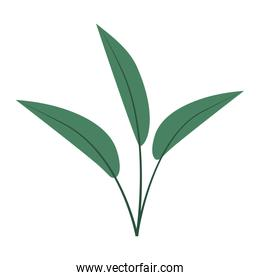 white background with colorful silhouette of leaves lanceolate