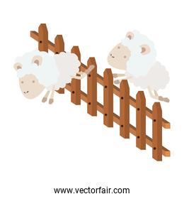 sheep animal couple jumping a wooden fence in colorful silhouette on white background