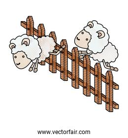 sheep animal couple jumping a wooden fence in color crayon silhouette on white background