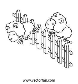 sheep animal couple jumping a wooden fence in sketch silhouette on white background