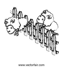 sheep animal couple jumping a wooden fence blurred silhouette on white background