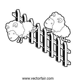 sheep animal couple jumping a wooden fence black color section silhouette on white background
