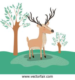 moose animal caricature in forest landscape background