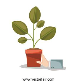 plant pot and hand in white background