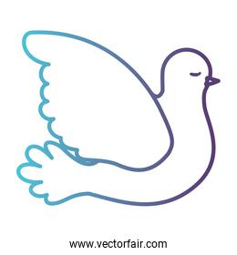 pigeon peace side view on gradient color silhouette from blue to purple