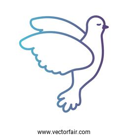 pigeon peace flying in side view on gradient color silhouette from blue to purple