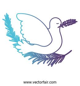 pigeon peace symbol side view with olive branch in her peak on gradient color silhouette from blue to purple