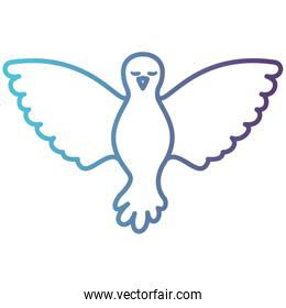 pigeon peace front view on gradient color silhouette from blue to purple