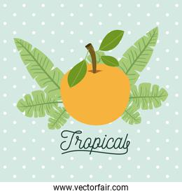 orange fruits with leaves on decorative lines color background
