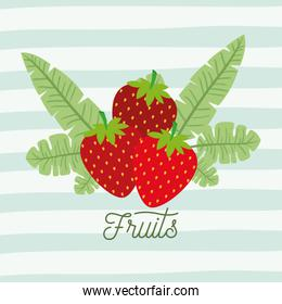 strawberries fruits with leaves on decorative lines color background