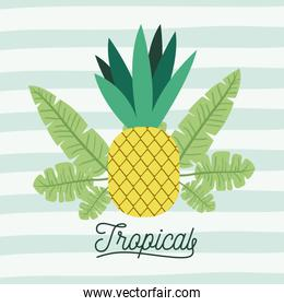 pineapple tropical fruit with leaves on decorative lines color background