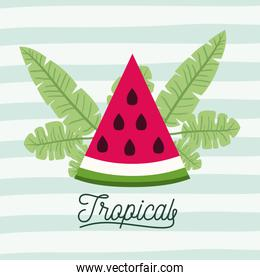 watermelon slice tropical fruit with leaves on decorative lines color background