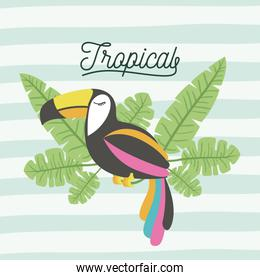 toucan bird tropical with leaves on decorative lines color background