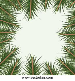 christmas ornament background with colorful pine branches