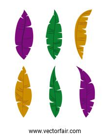 set of colorful feathers on white background