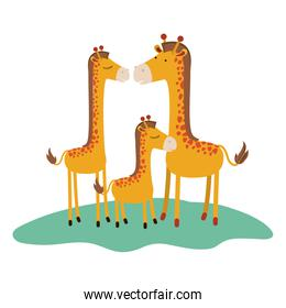 cartoon giraffes couple with calf over grass in colorful silhouette on white background
