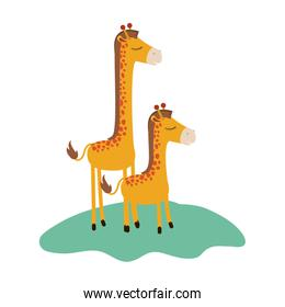 cartoon giraffe mom with calf over grass in colorful silhouette on white background