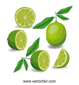 lemon fruit whole and sliced in colorful silhouette over white background