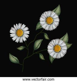 colorful chamomile flowers plant set embroidery in black background