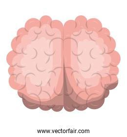 brain top view in realistic colorful silhouette