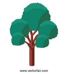 tree plant isometric icon
