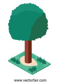 tree plant with grass isometric icon
