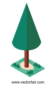 pine tree plant with grass isometric icon