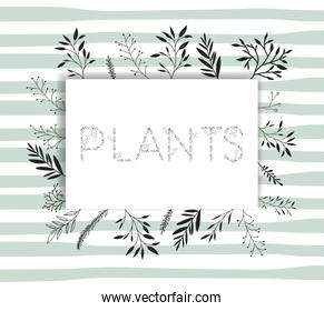 plants word with handmade font and floral decoration