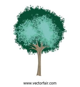 tree painted watercolor style