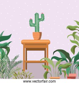 cactus houseplants in wooden chair garden scene