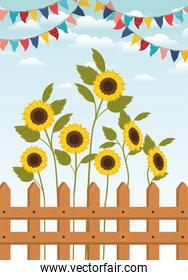 festa junina with fence and sunflowers garden
