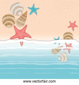 sea shell and star in the sand design