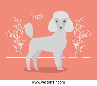 pretty poodle dog pet character