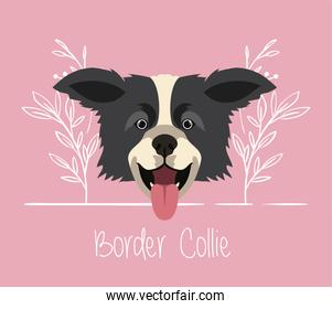 cute border collie dog pet head character
