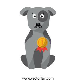 pet dog with medal sitting animal domestic