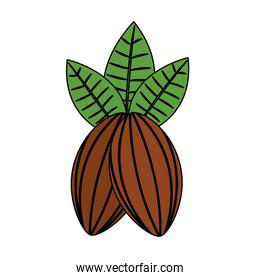 cocoa beans and leaves fruit food healthy