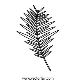 branch palm leaves frond natural