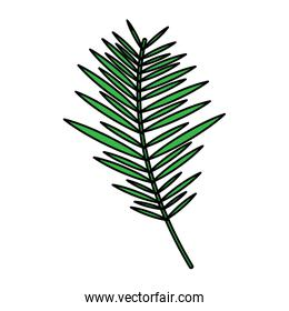 green branch palm leaves frond natural