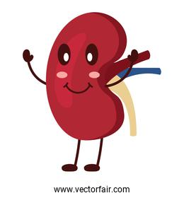 cartoon happy human kidney smiling character
