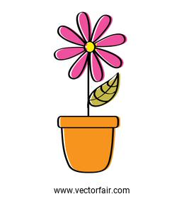 potted daisy flower petal leaves decoration