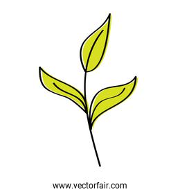 branch leaves plant natural botanical icon