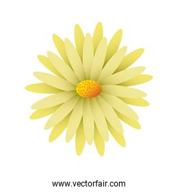 beautiful natural flower daisy petals decoration