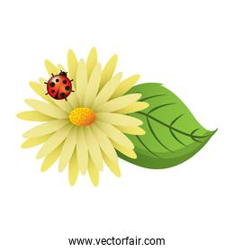 flower daisy ladybug and leaves decoration natural