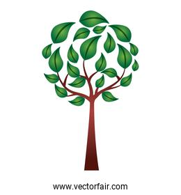 eco round tree leaves branches environment symbol vector illustration