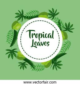 tropical leaves decoration