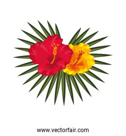 exotic and tropical flower icon