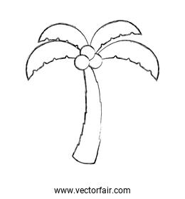 tree palm with coconut